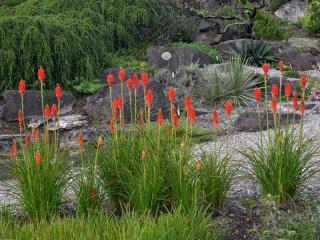 Le jardin du futur : création de jardin autonome