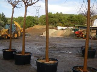 Plantation en racines nues
