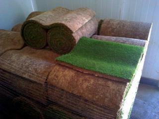 Lawn grass rolls sale in Aix en Provence