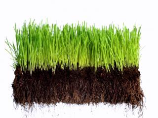 Terre végétale tamisée vendue à la remorque
