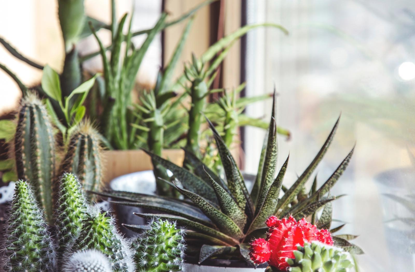 Vente de plantes d'intérieur près de Vitrolles (13)