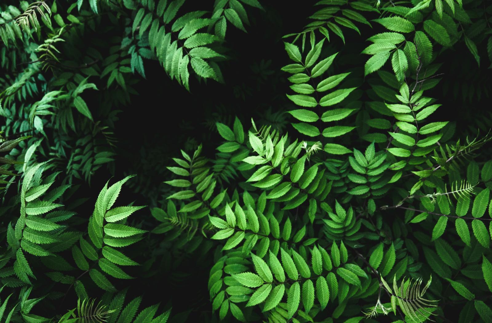Vente de plantes, arbres et végétaux extérieurs près de Cabriès