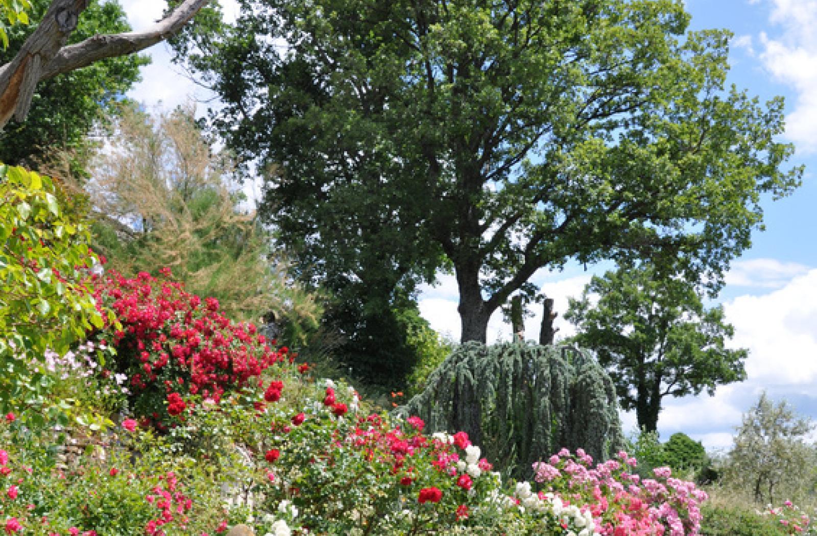 Découvrez les végétaux, arbres et végétaux de notre pépinière !
