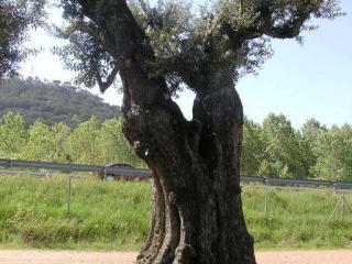 pepinieriste olivier 13
