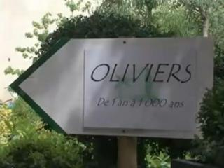 Les oliviers centenaires et millénaires : notre sélection