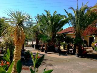 Yucca rostrata Plan de campagne