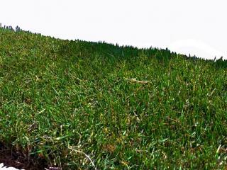Gazon Zoysia japonica en plaques prix et caractéristiques