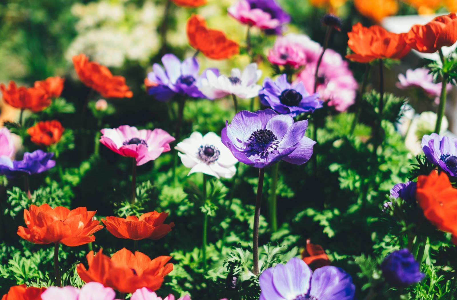 Nos plantes annuelles et plantes vivaces achat v g taux for Plantes et arbustes vivaces