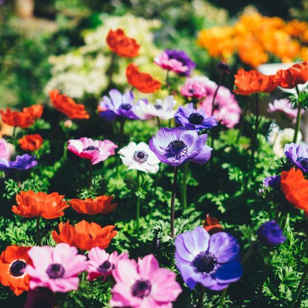 Nos plantes annuelles et plantes vivaces