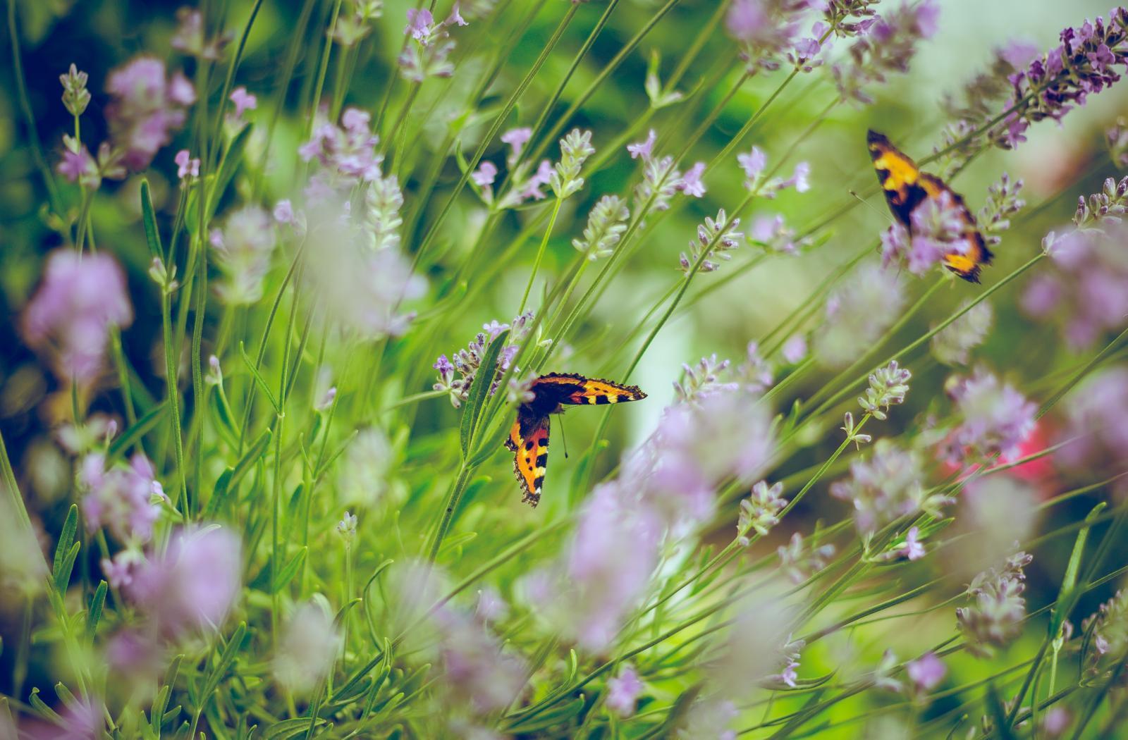 Confiez la création et l'entretien de votre jardin  à un paysagiste !