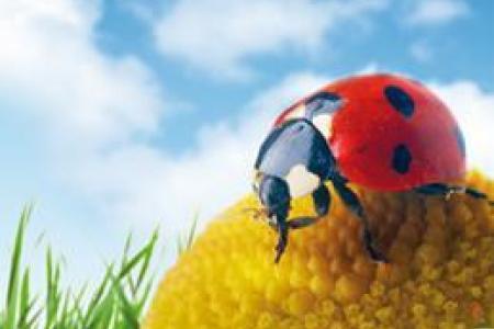 Insecticide biologique et végétal