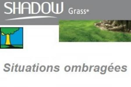 Gazon d'ombre en graine à semer