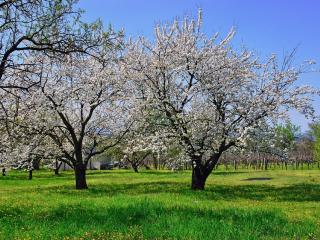 Comment bien choisir son arbre fruitier ?