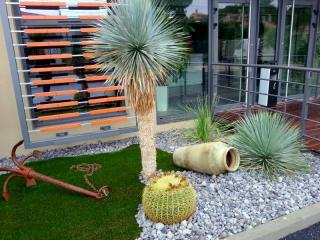 Yucca rostrata Carry le rouet
