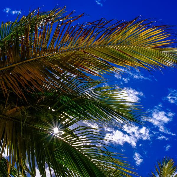 Vente de palmiers dans les Bouches du Rhône