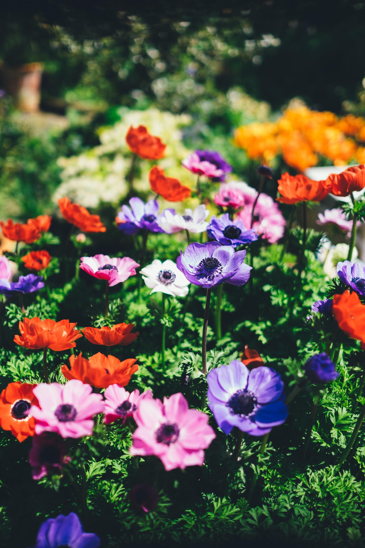 Nos plantes annuelles et plantes vivaces acheter for Entretien plantes vivaces