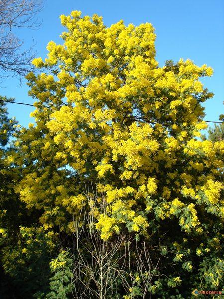 Les arbres acheter v g taux ext rieurs marseille 13 for Acheter vegetaux