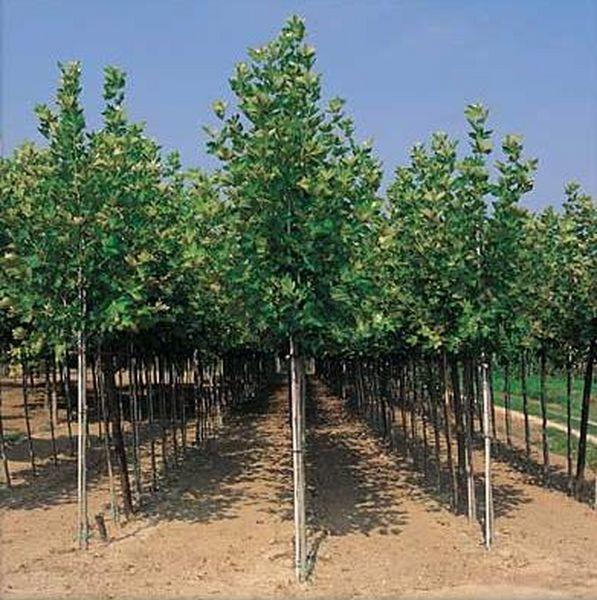 Les arbres achat v g taux ext rieurs marseille 13 aix for Achat vegetaux