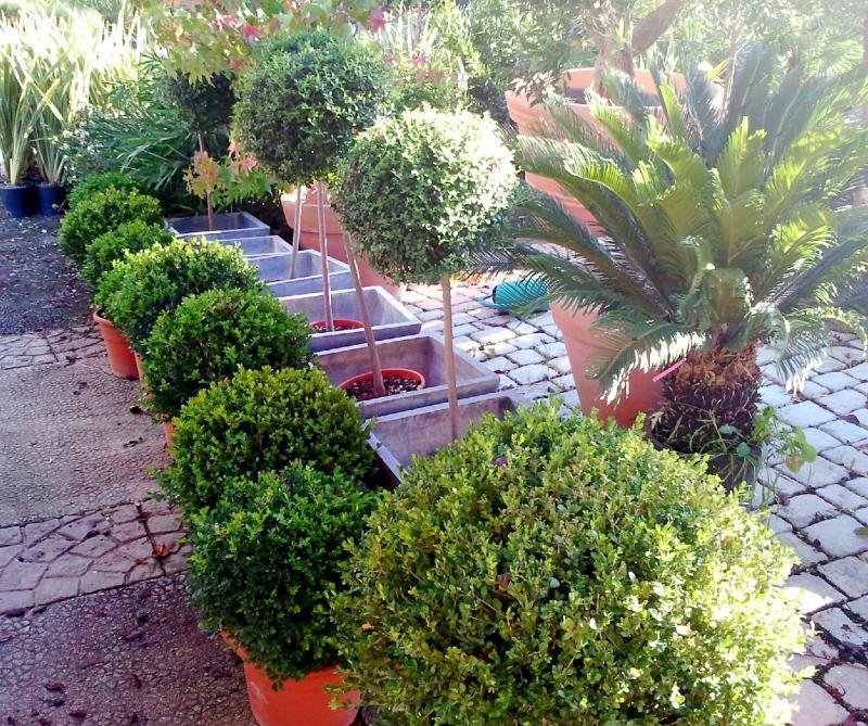Les topiaires vente v g taux ext rieurs marseille 13 for Entretien jardin frejus
