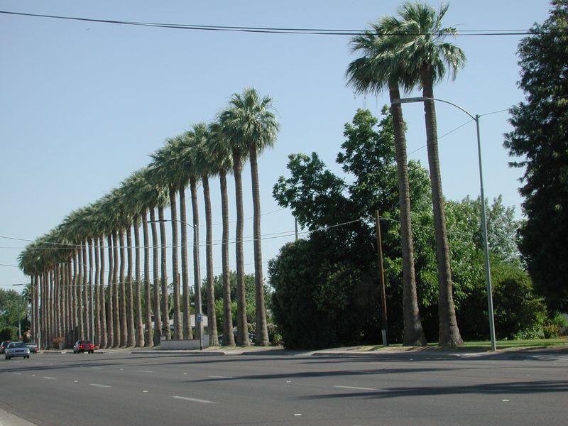 Palmier washingtonia acheter palmier marseille 13 for Entretien jardin marseille