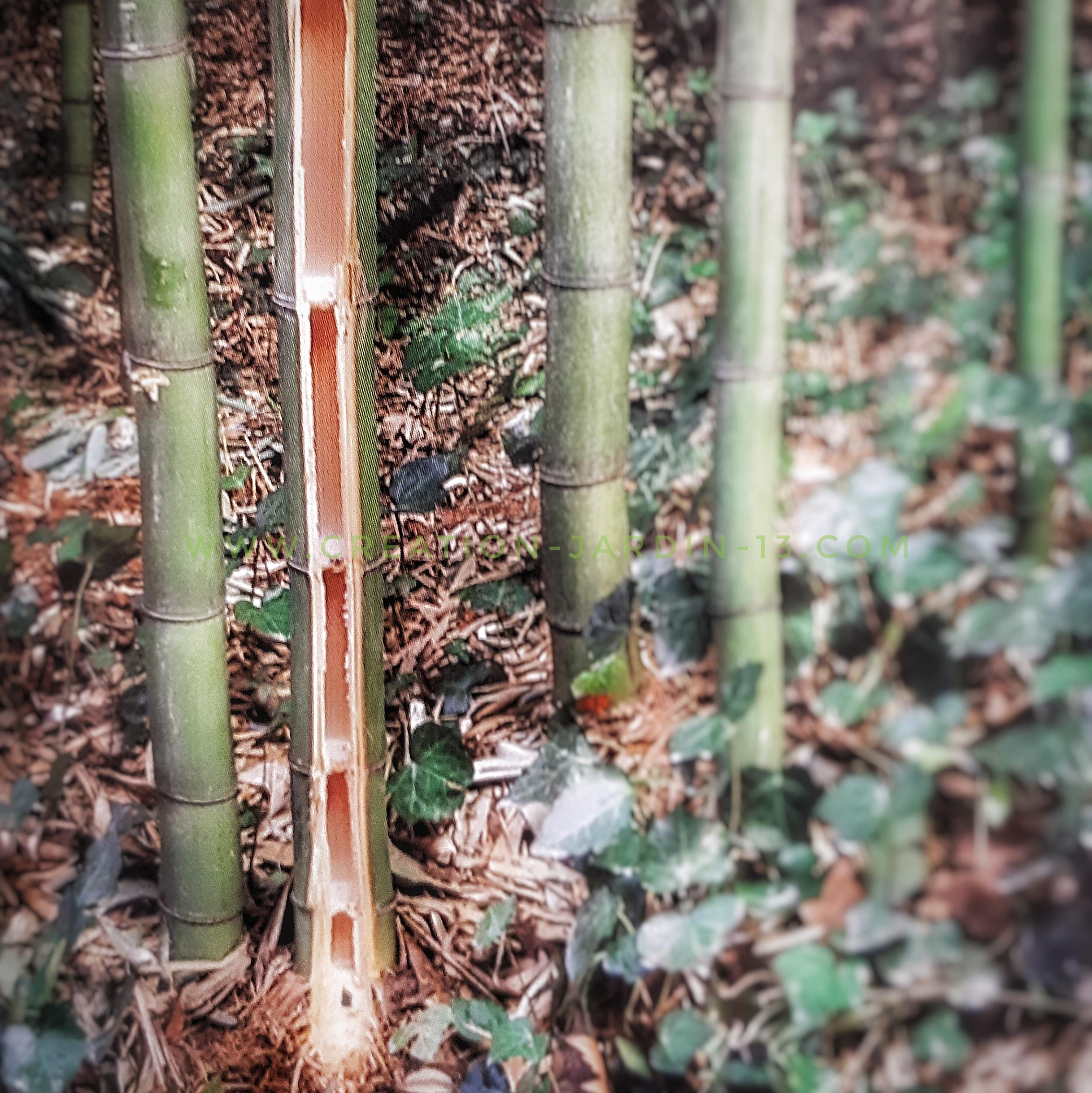 Chaume de bambou