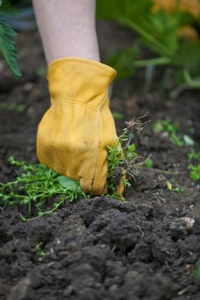 Désherber votre jardin