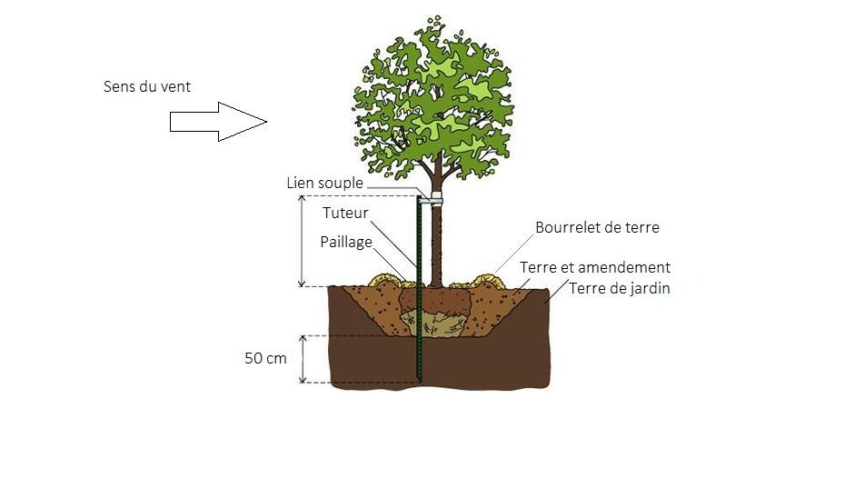 Plantation arbre - Tuto Provence Paysage Méditerranée