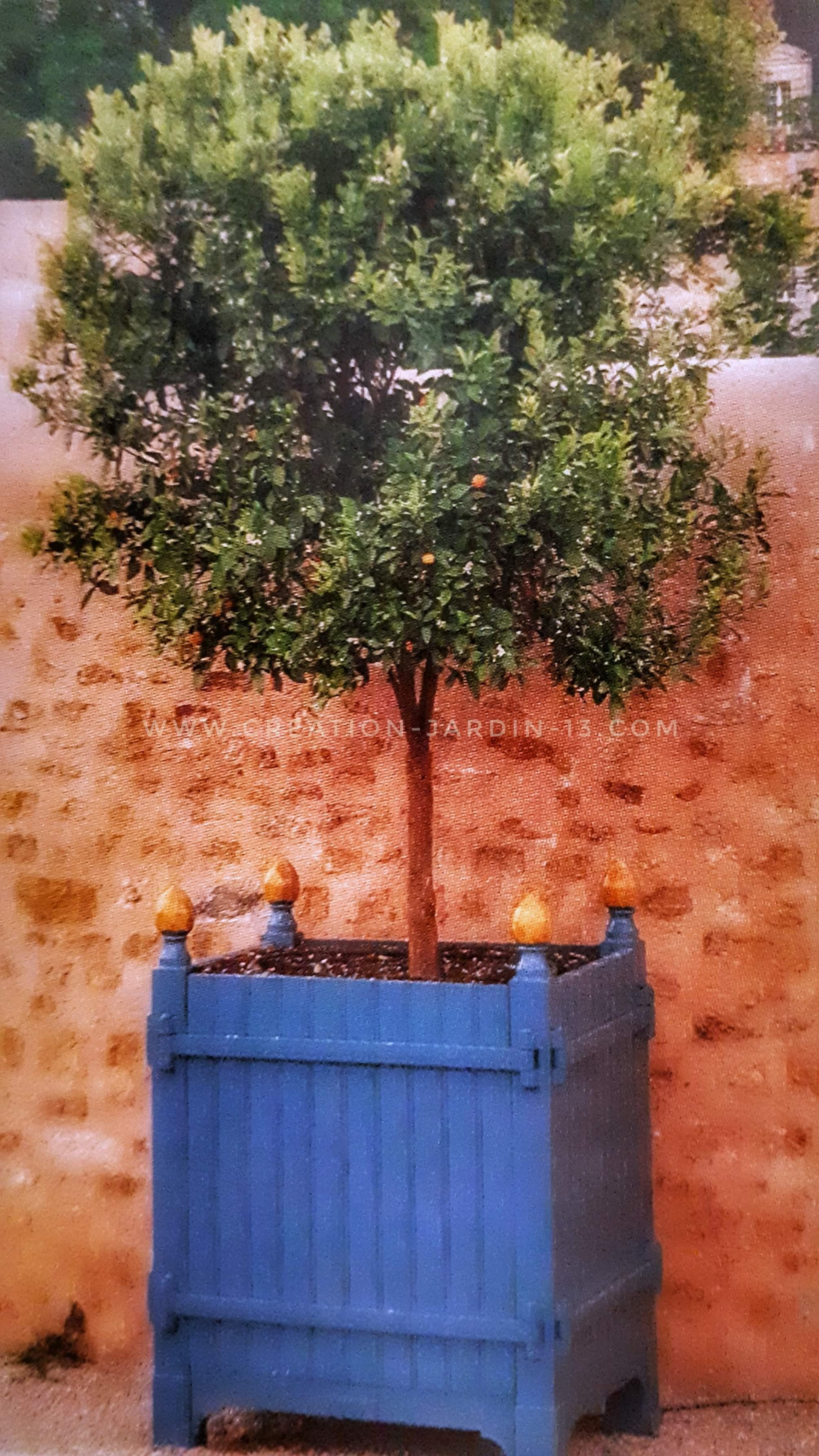 Bien choisir un arbre fruitier en pot